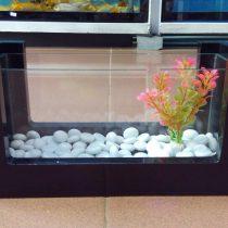 Bể thủy sinh mini