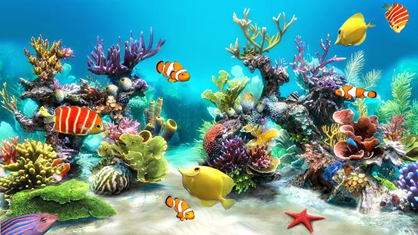 Các loại cá thủy sinh