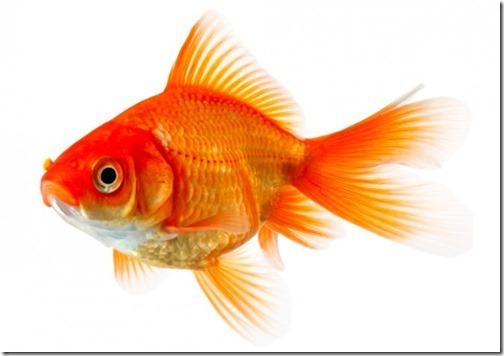 Kết quả hình ảnh cho cá